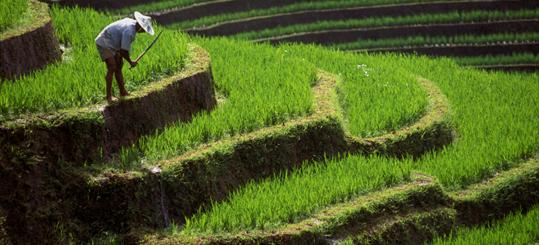 crop system in india